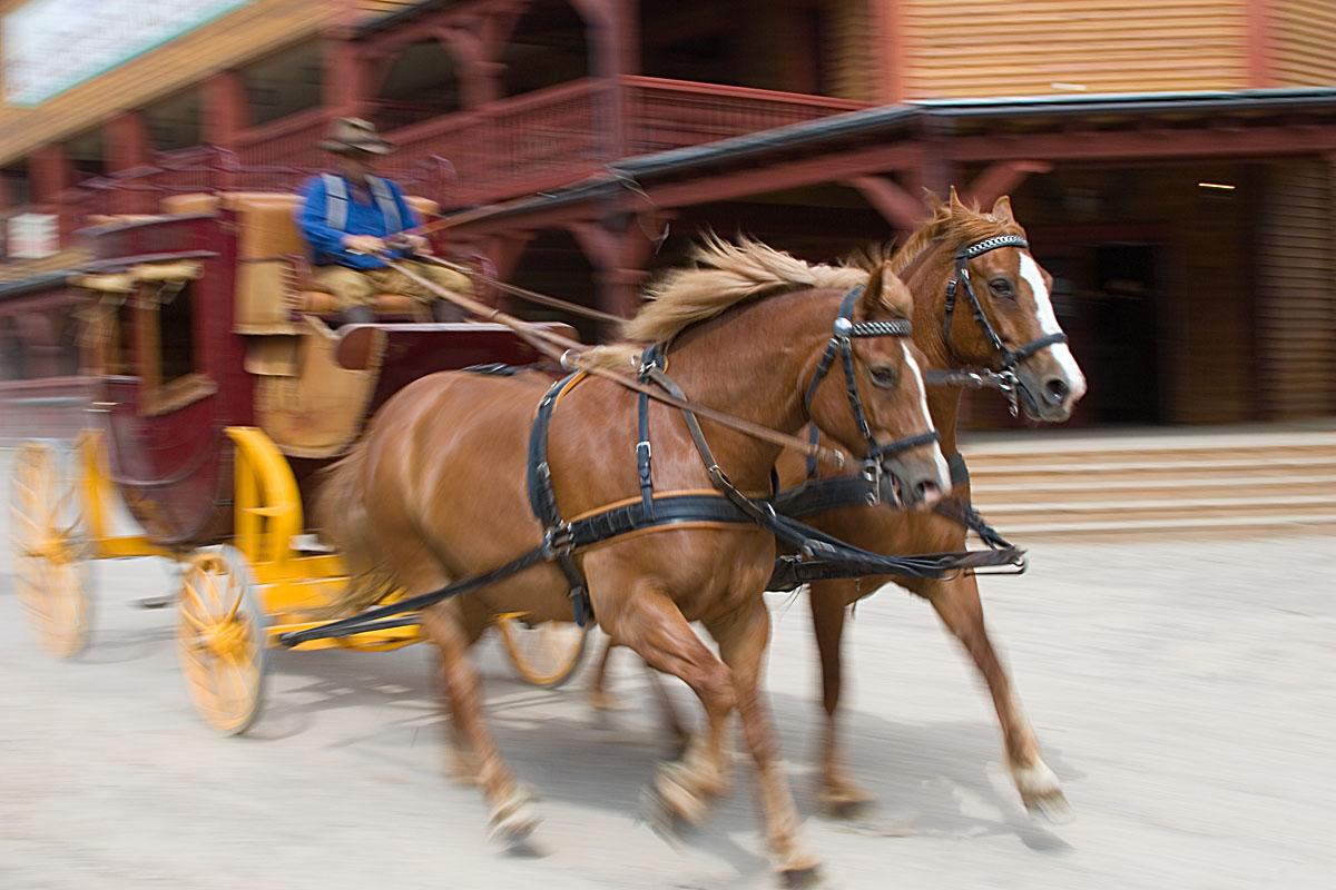 Pferde: Mitzieher ©Bernd Kröger