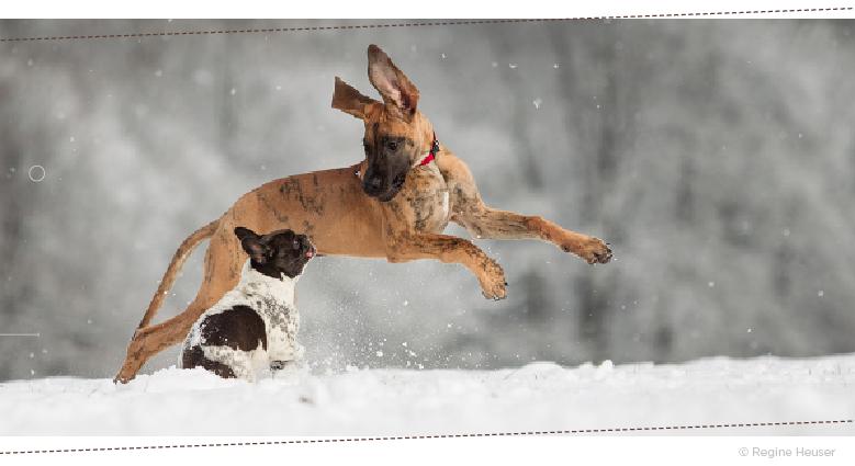 Tierfotografin Regine Heuser, Tipps und Tricks
