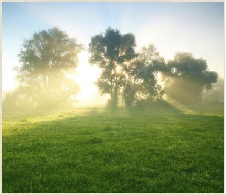 CEWE_Tipps_kleine_gartens_fotografenherz_morgenstund_lichtverhaltnisse