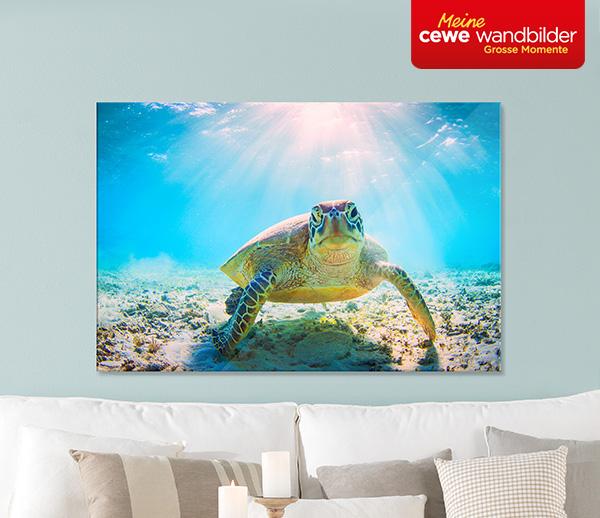Schildkrote_unterwasser_fotografie_poster_acrylglas_brillant