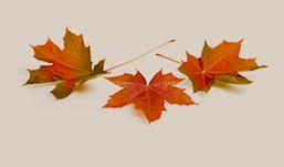 blatter_fallen_herbst_farbe_orange_braun_gelb
