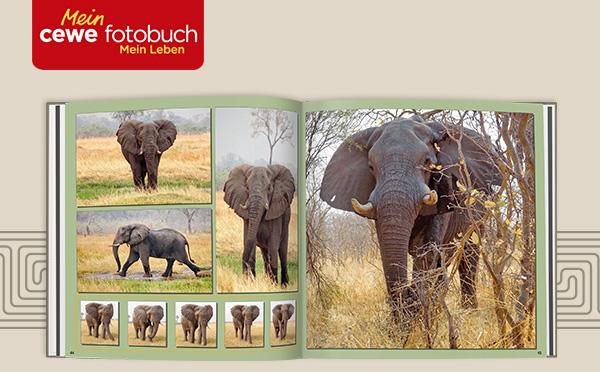 cewe_fotobuch_reise_ferien_elefanten_serien_afrika_africa_bewegungsstudie_kunden