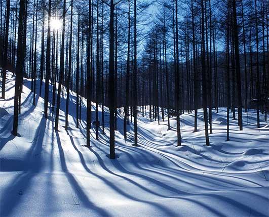 Schatten der Bäume verzaubern den Schnee