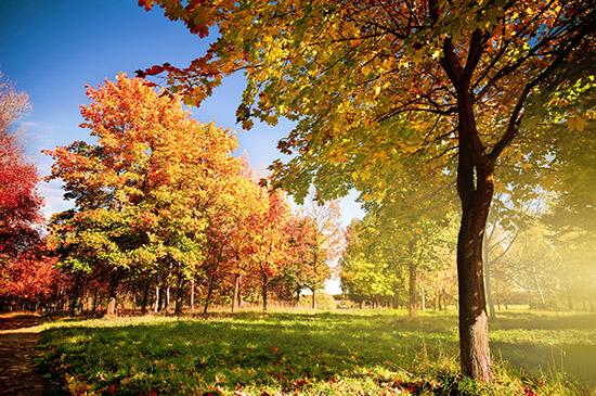 Die goldene Jahreszeit bietet ein riesiges Farbspektrum für Ihre Herbstfotografie