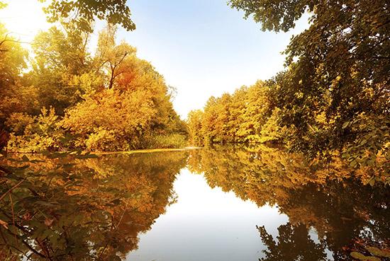 Der Herbst ist als goldene Jahreszeit bekannt