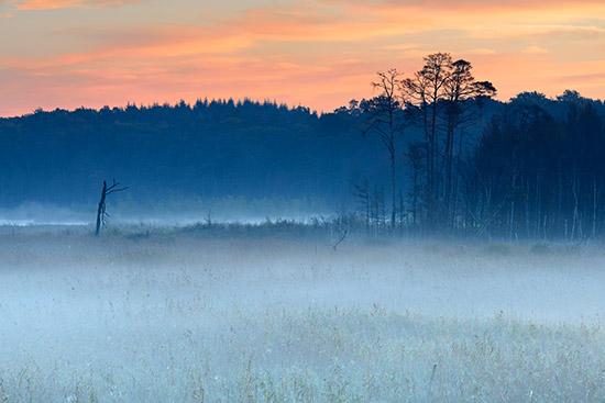 Morgennebel ergibt immer ein gutes Motiv in trüberen Farben