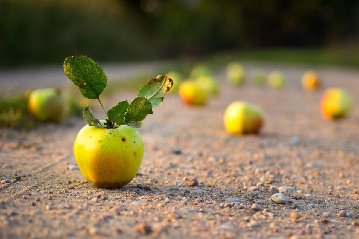 Tiefenschärfe mit Apfel abgebildet