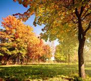 Der Herbst ist die goldene Jahreszeit